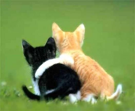 Lijepa maca šprica